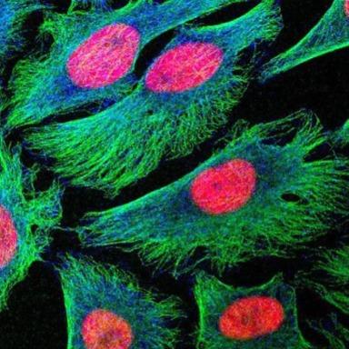 El interior de la célula