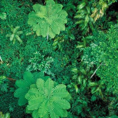 Un mundo verde: la ciencia de las plantas