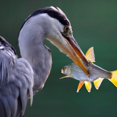 Ecosistemas: relaciones tróficas entre seres vivos