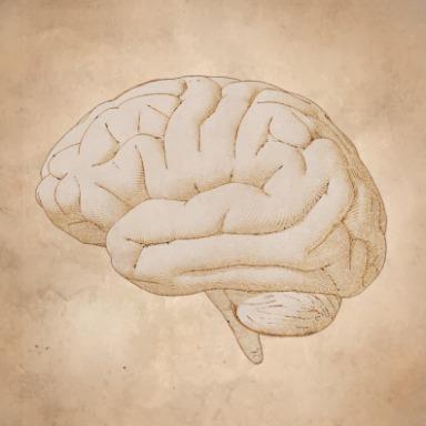 Sistema Nervioso: las partes y el todo