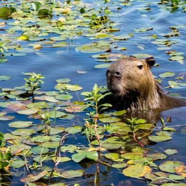 Humedales: diversidad de vida acuática