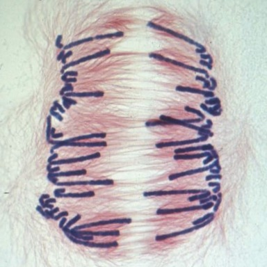 Cromosomas y división celular