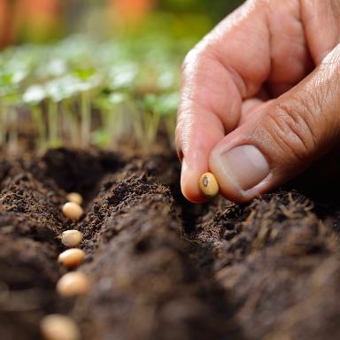 De la planta a la semilla: camino de ida y vuelta