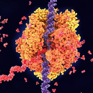 ARN y los genes en acción